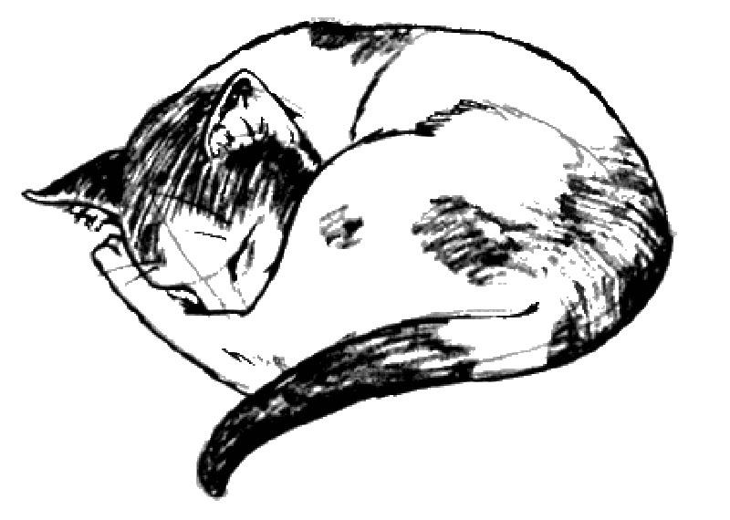 Малюнок кішки 1