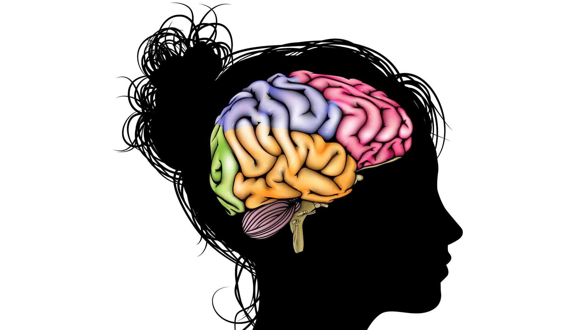 мізки, мозг, brain