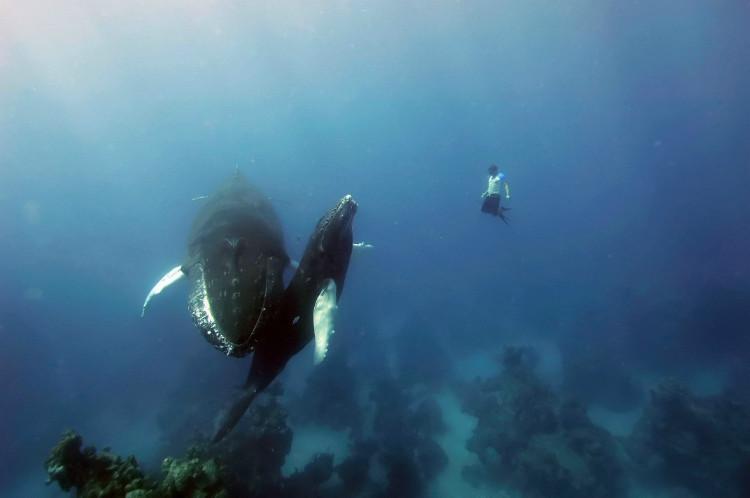Знайомство в китами