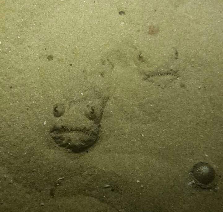 Жах у піску