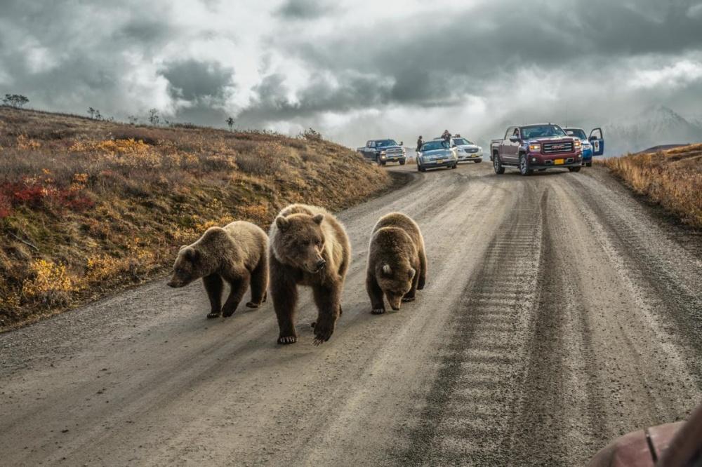 Три ведмедя