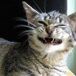 Кіт посміхається