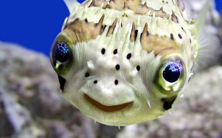 Хижа рибка