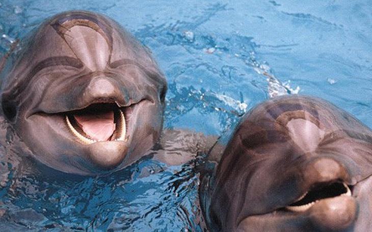 Посмішка дельфіна