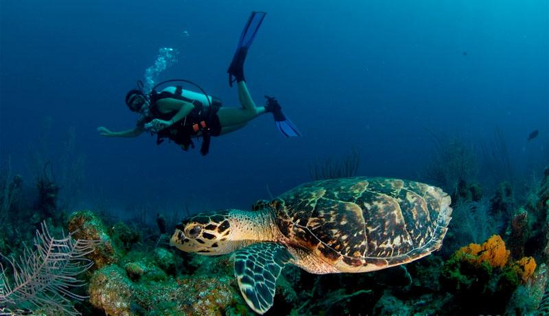 Підводна прогулянка на Кайманових островах