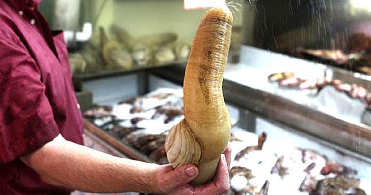 Гуідак – дивний молюск