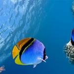 Цікавинки про індійський океан