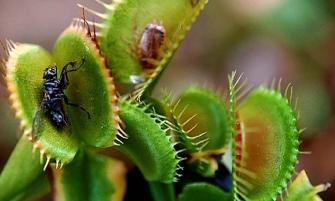 Факти про рослини